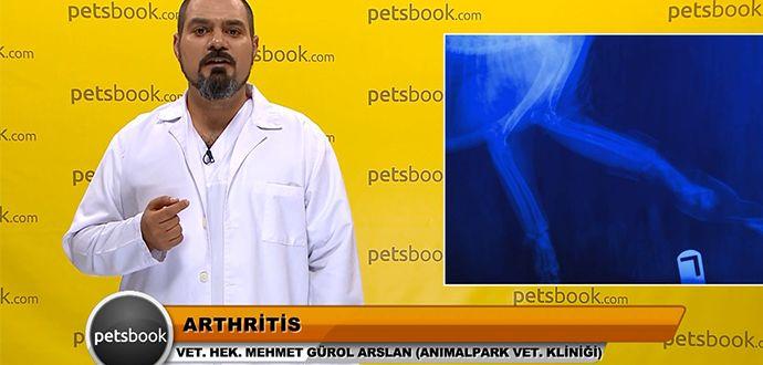 Evcil Hayvan Sahipleri İçin Petsbook Uygulaması