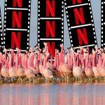 Türkiye Netflix İletişim Numarası